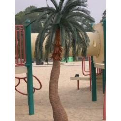 9' Queen Palm